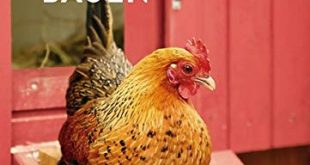 Huehnerstaelle bauen 310x165 - Hühnerställe bauen